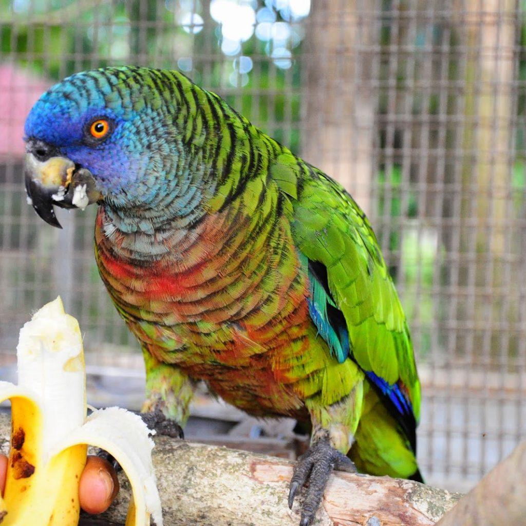 St.Lucia wildlife