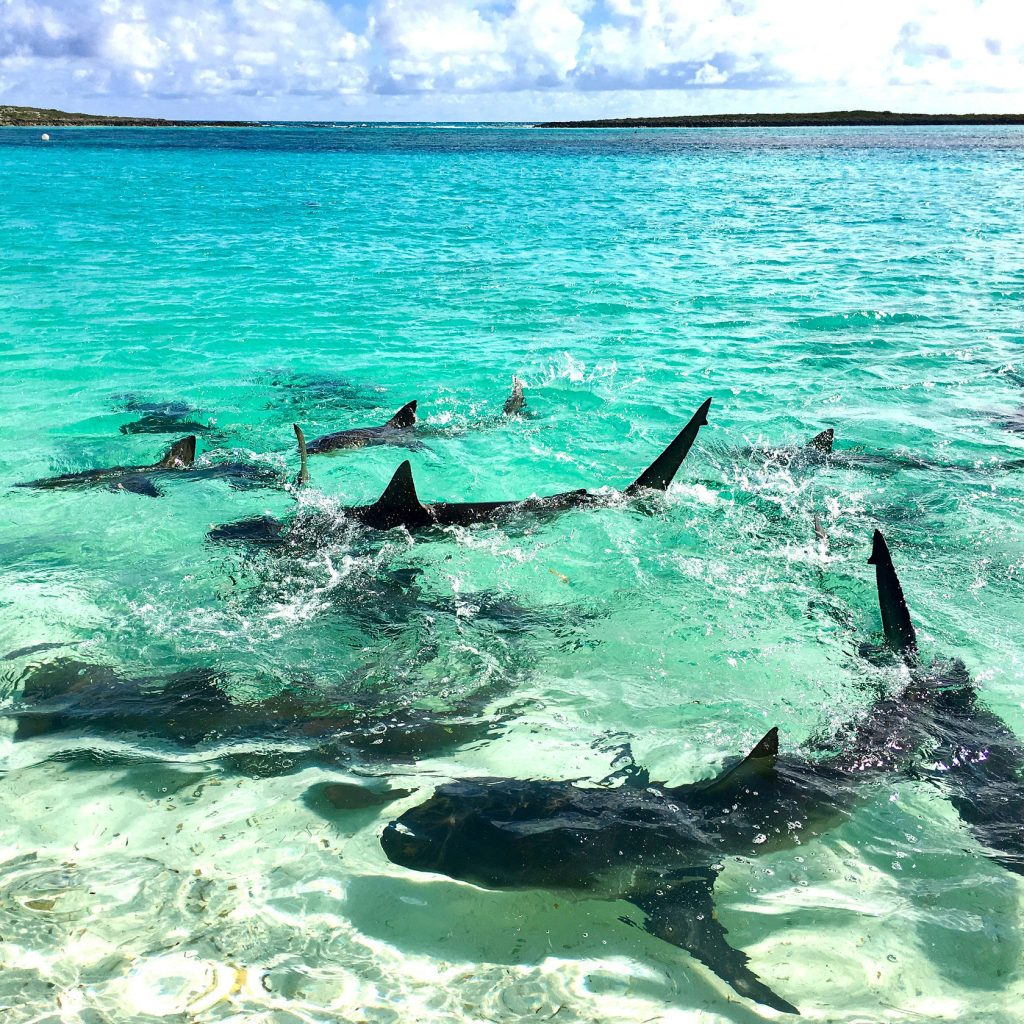 Christmas vacation in Bahamas
