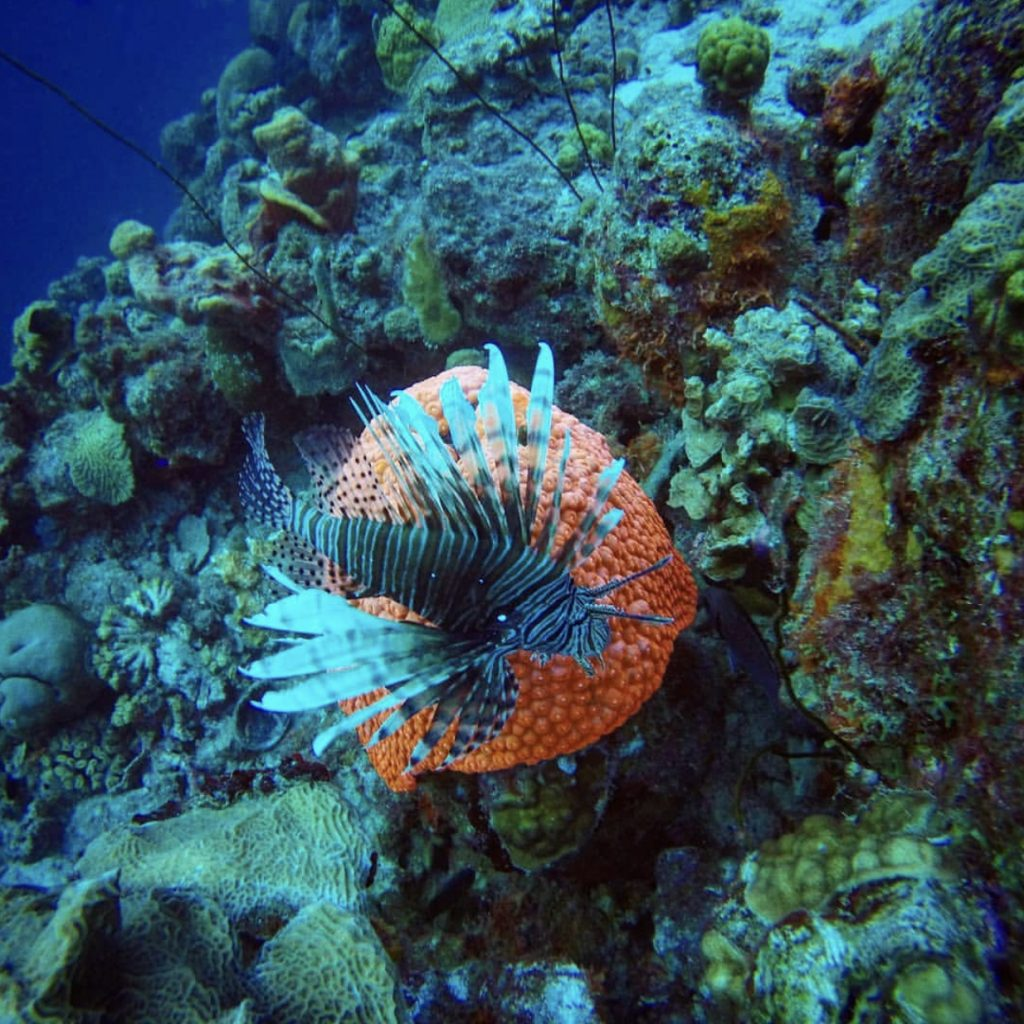 Bonaire National Park : things to do in Bonaire