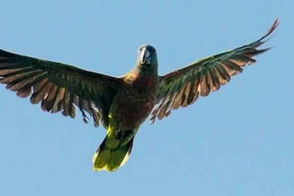 bird watching in St. Lucia